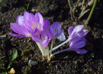 Mine blomster